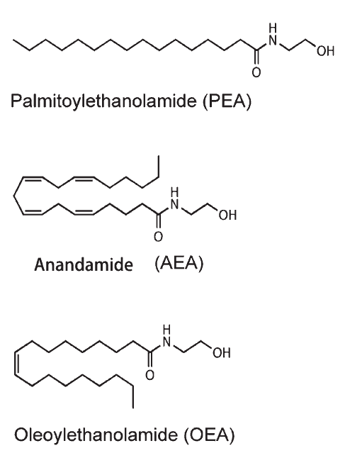 structure comparison between oleoylethanolamide and anandamide