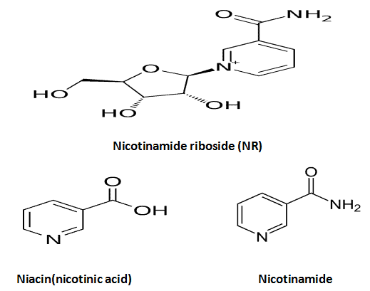 chemical structures of Nicotinamide riboside VS Niacin VS nicotinamide