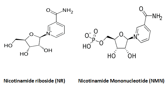 chemical structures of nicotinamide riboside (NR) vs nicotinamide mononucleotide (NMN)