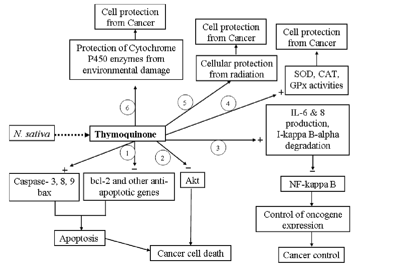 thymoquinone for anti-caner