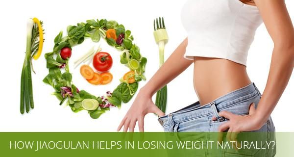 Gynostemma extract for weight loss