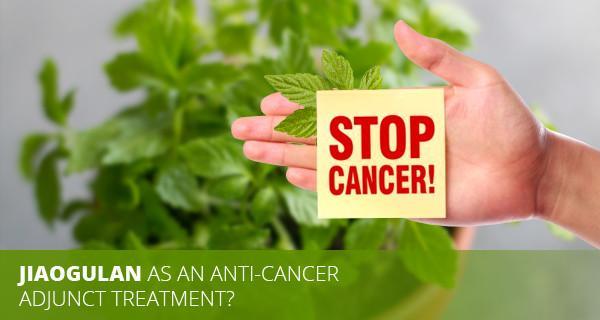 Jiaogulan for anti-Cancer