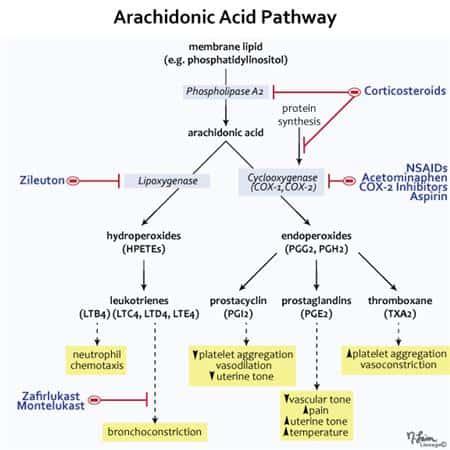 arachidonic acid pathway