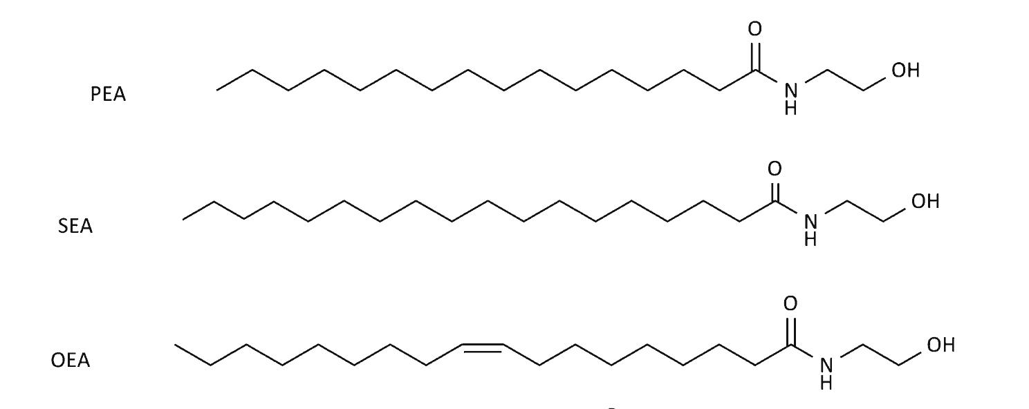OEA PEA SEA Molecular comparison