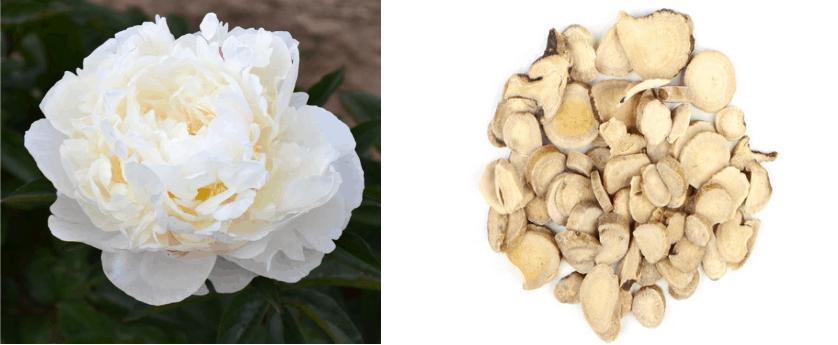 Paeoniflorin of White Peony Extract souce