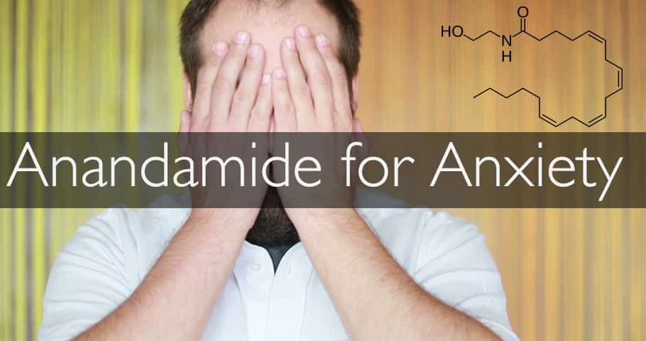 anandamide anxiety