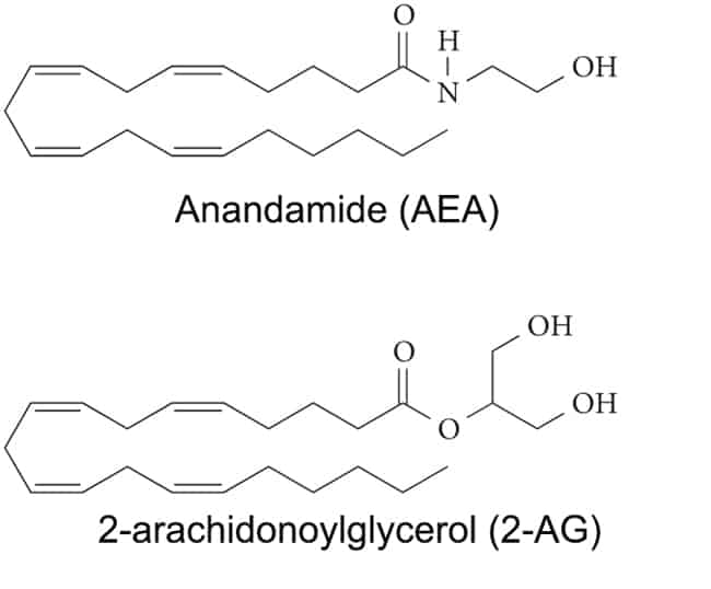 chemical structure of anandamide and 2-AG bind to CB1 and CB2