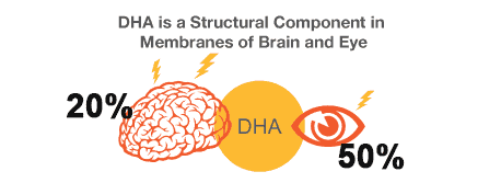 DHA in brain and eye