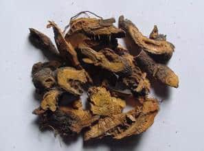Polygonum cuspidatum plant