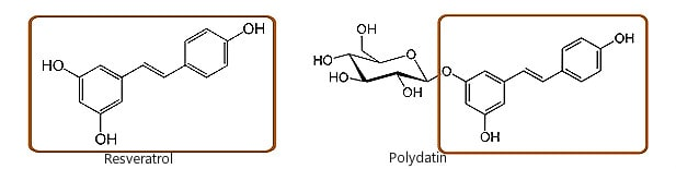 chemical structures of resveratrol and polydatin