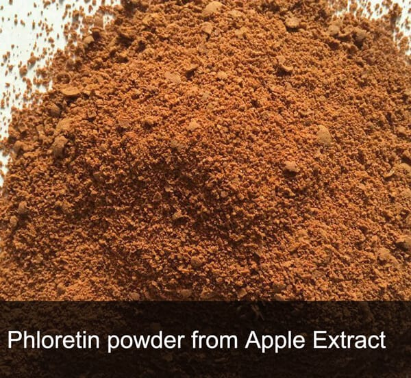 Phloretin powder extract