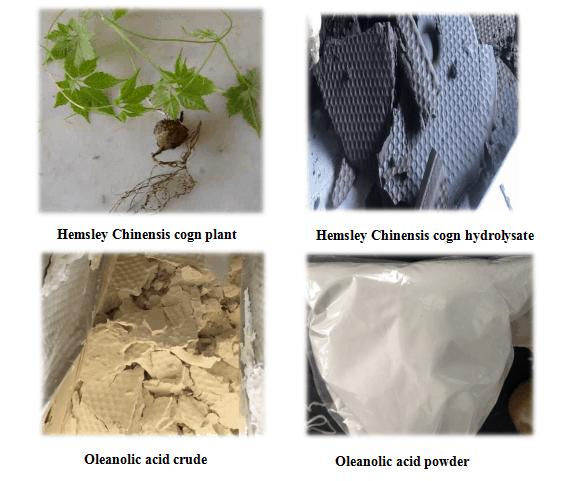 Oleanolic acid manufacturing