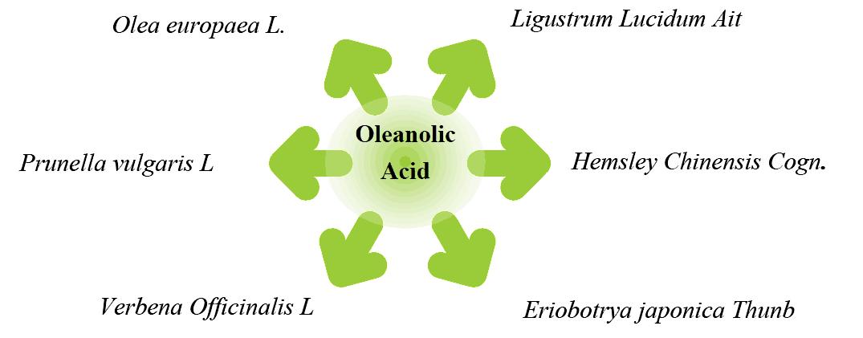 oleanolic acid sources