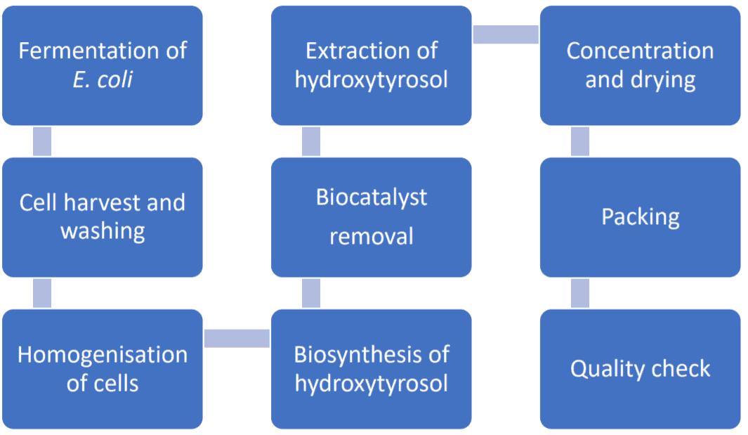 Flow diagram of the fermented hydroxytyrosol production process