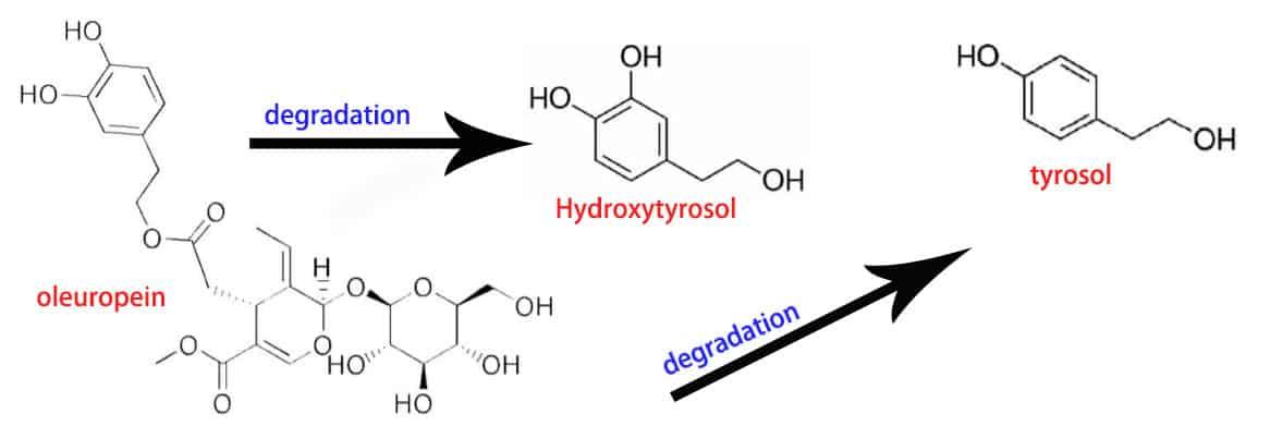 Structures of oleuropein hydroxytyrosol and tyrosol