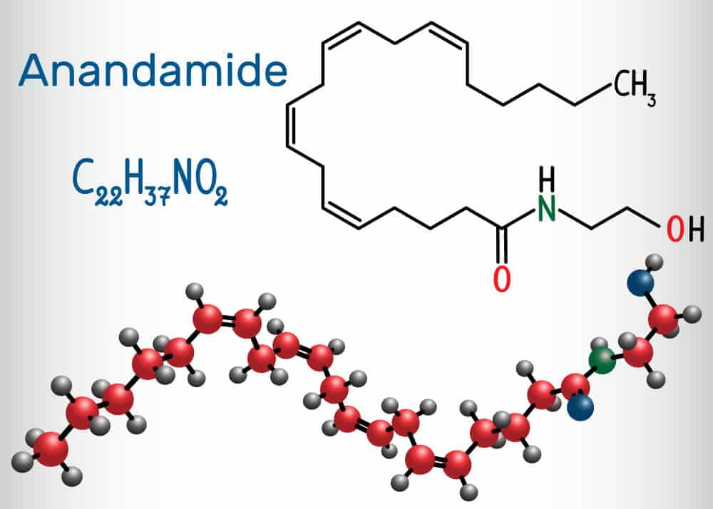 Anandamide Chemical Structure