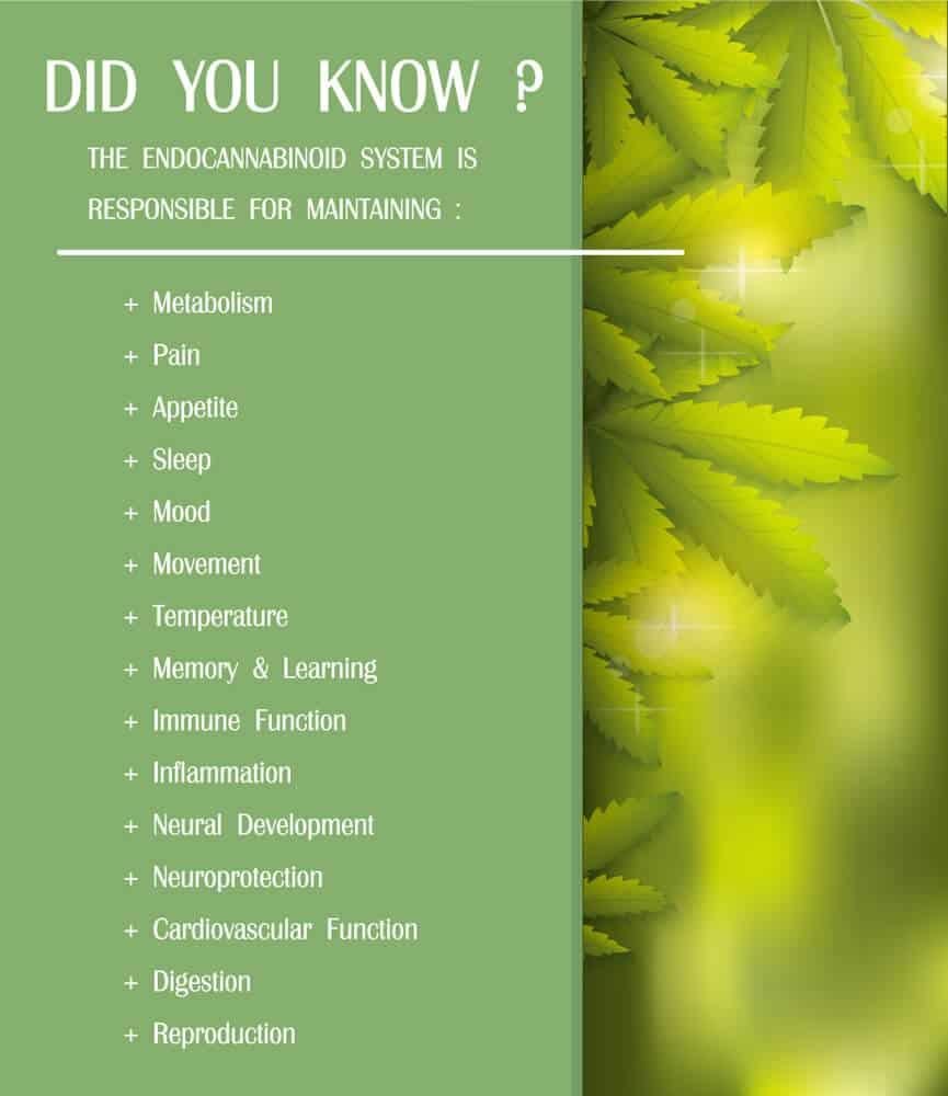 endocannabinoid system benefits