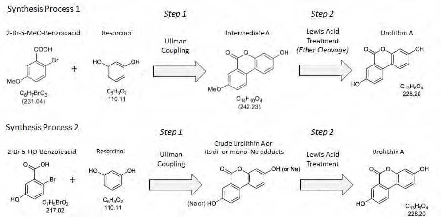 Process Schemes for the Synthesis of Urolithin A