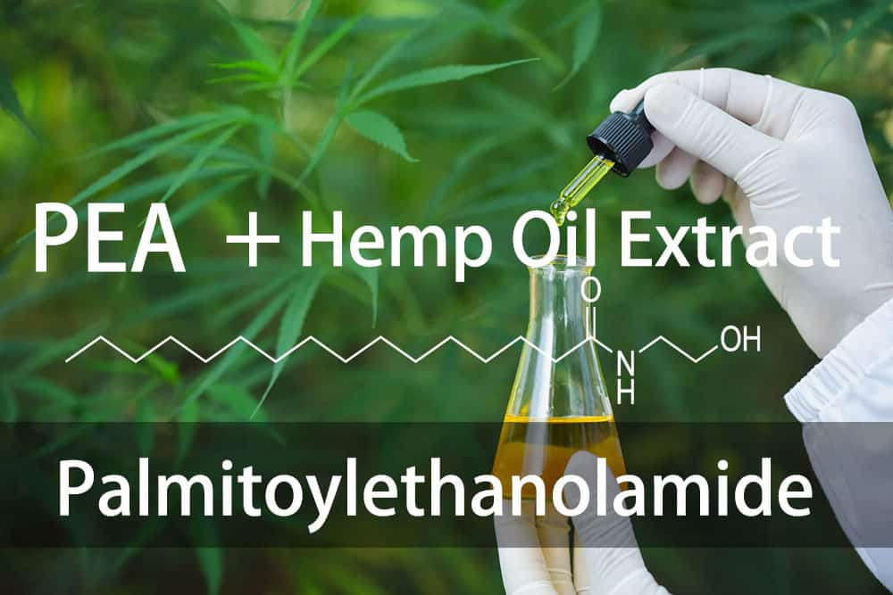 Palmitoylethanolamide and hemp oil extract exert synergistic acute and chronic pain