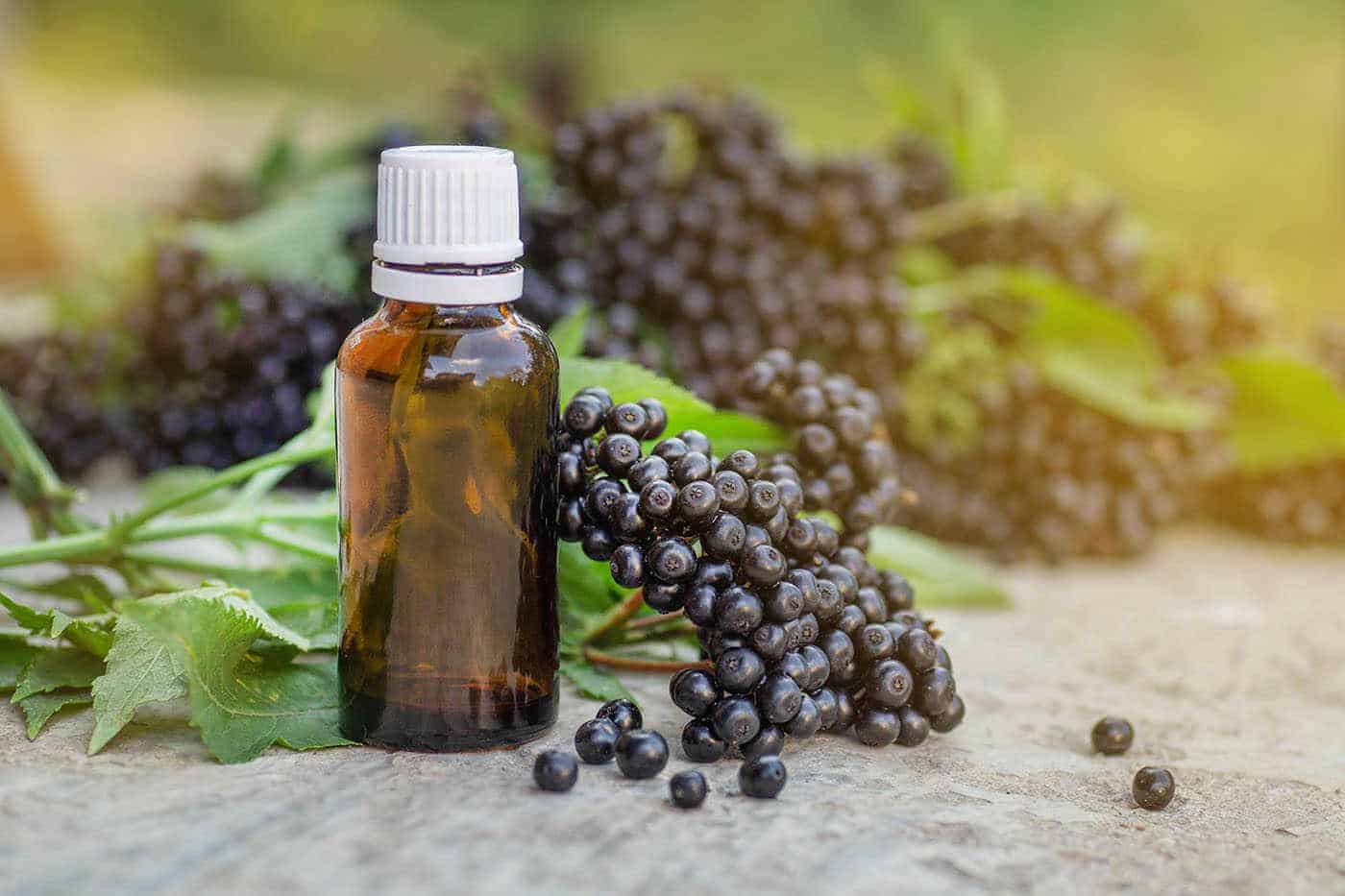 Elderberry Extract supplements